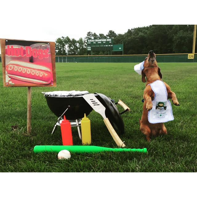 A small dog with brown fur wearing an apron and standing on its hind legs beside a barbecue grill