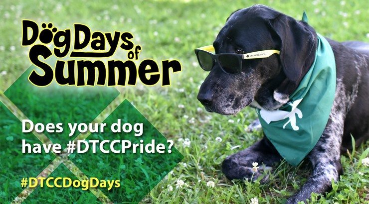 A dog wearing sunglasses with the Dog Days of Summer logo superimposed on top