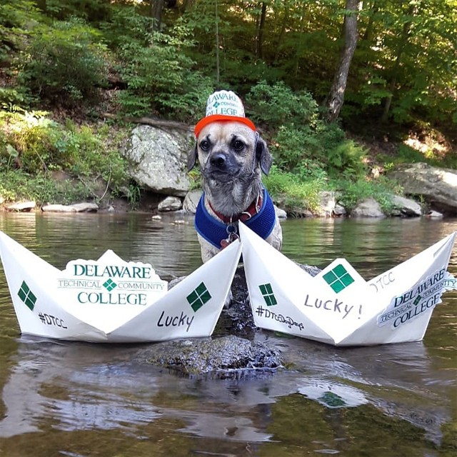 A small dog with gray fur in a creek standing behind two Delaware Tech themed paper boats