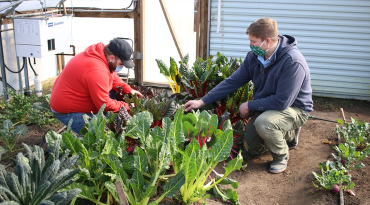 A student and the Farm Manager kneeling over plants in a greenhouse wearing masks