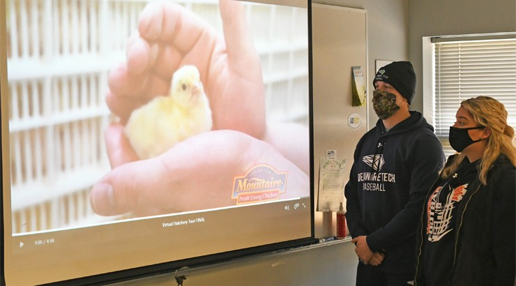 To the left is a projection of a baby chicken on a projector screen and on the right are two students wearing masks looking at the projection